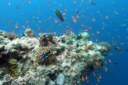 ryby na korálovém útesu na Maledivách