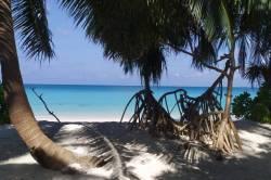 palmová alej u pláže Omadhoo