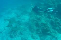 foto se žralokem
