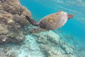 Fauna na Maledivách